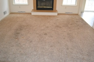 Power Clean Carpet Amp Upholstery Care Professional